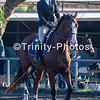20191027 - TCA - Equestrian Competition  089 Edit