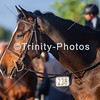 20191027 - TCA - Equestrian Competition  003 Edit