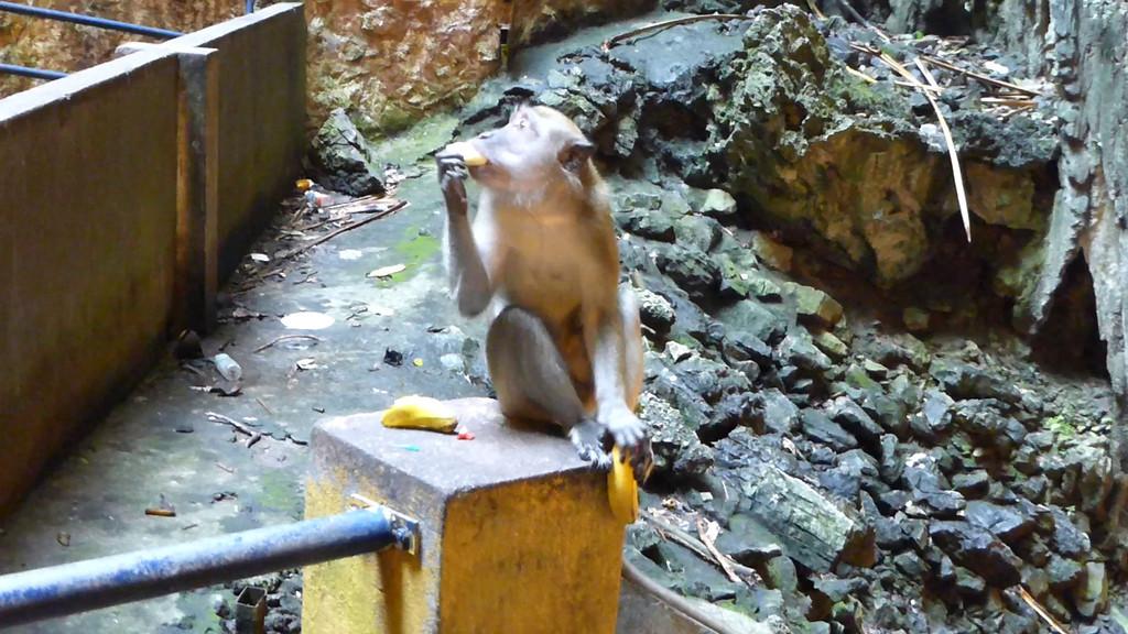 Video of Monkey Eating a Banana at Batu Caves