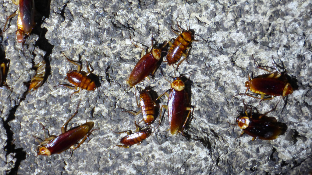 Cockroaches Crawling Everywhere