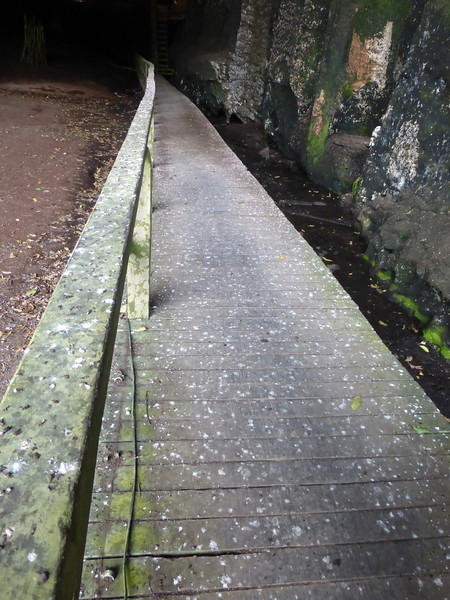Bat and Bird Poop Covering the Wooden Pathway