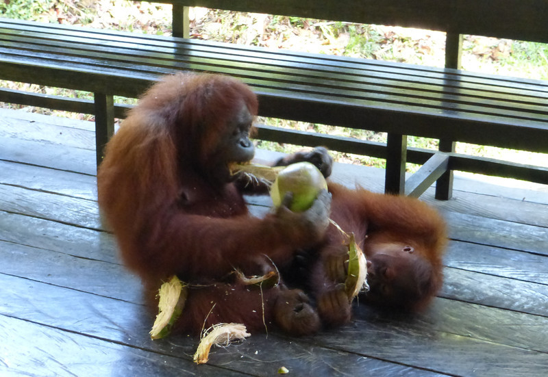 Grandmother and Grandson Eating Coconut