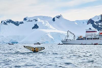 Humpback and our ship, Akademik Ioffe