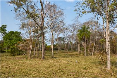 Southern Pantanal scenery