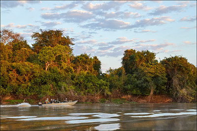 Pantanal Scene