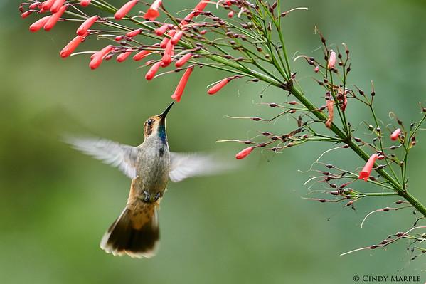 Birding Colombia 2019
