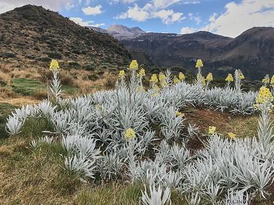 Los Nevados park