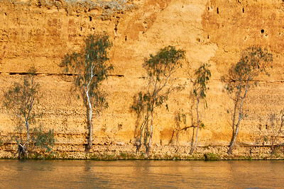 Along the Murray River