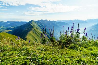 Wildflowers on the Augstmatthorn near Interlaken, Switzerland.