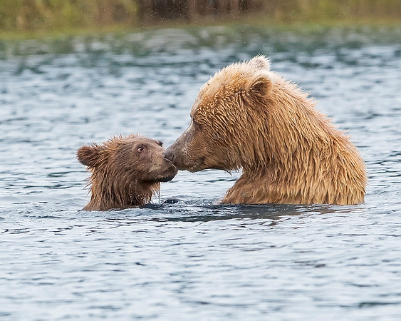 Lake Clark National Park Sow and Cub