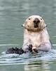 Kenai Fjords National Park Sea Otter