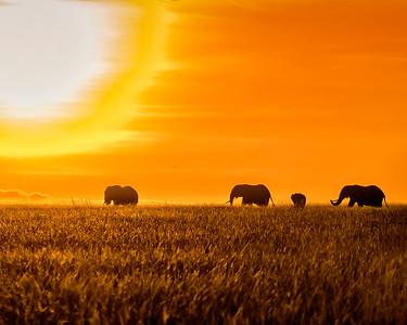 Maasai Mara Sunrise Elephants