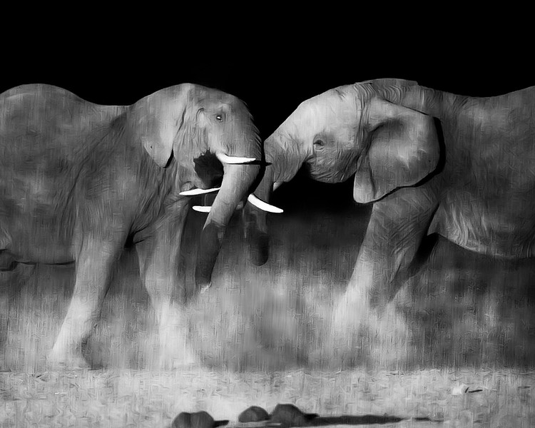 Night Elephant Confrontation