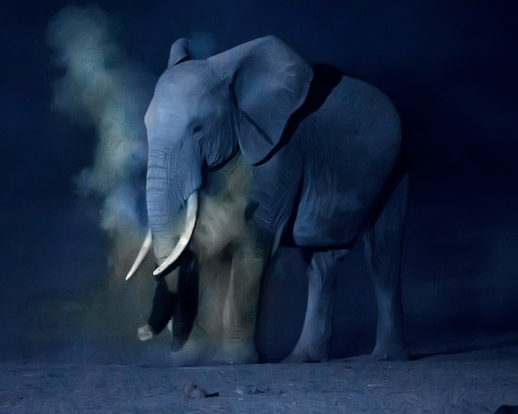 Dusting Night Elephant