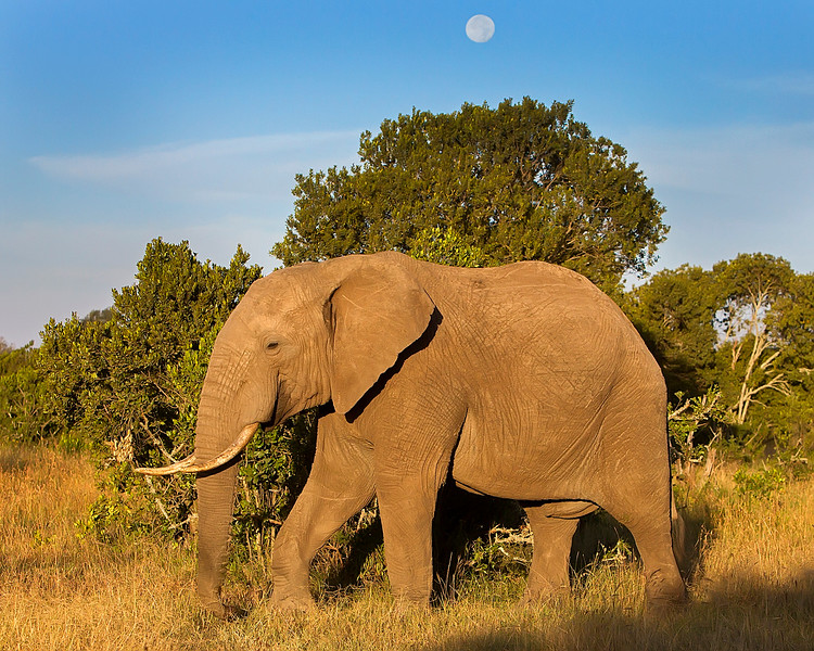 Sweetwaters Elephant