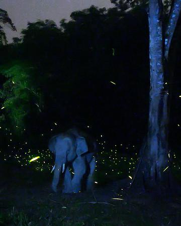 Nighttime Elephant with fireflies in Pakke Wildlife Sanctuary