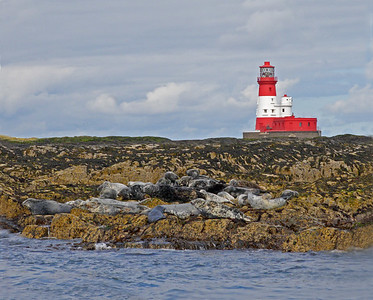 This is a photograph Longstone Lighthouse on the Farne Islands in England with Atlantic Grey Seals on the rocks (5/06).