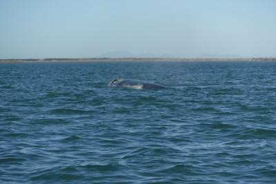 05-02-17 Whale Extravaganza