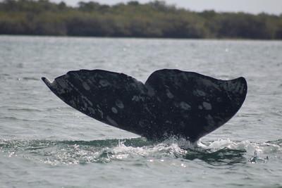 10-12 February Magdalena Bay Whale Camp