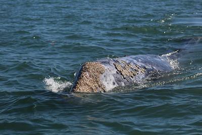 08-10 february Magdalena Bay Whale Camp
