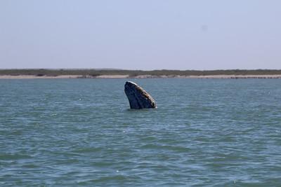 24-26 February 2017 Magdalena Bay Whale Camp