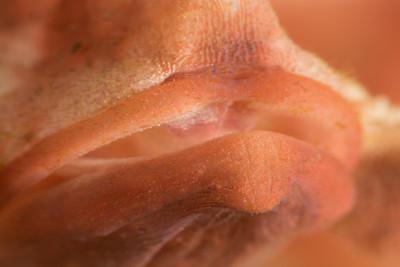 Lips of a Paddle-Flap Scorpionfish (Rhinopias)