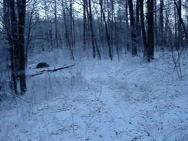 VIDEO  Part Two of a Snowy Walk