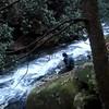 VIDEO  Uncle Fungus Gets Water