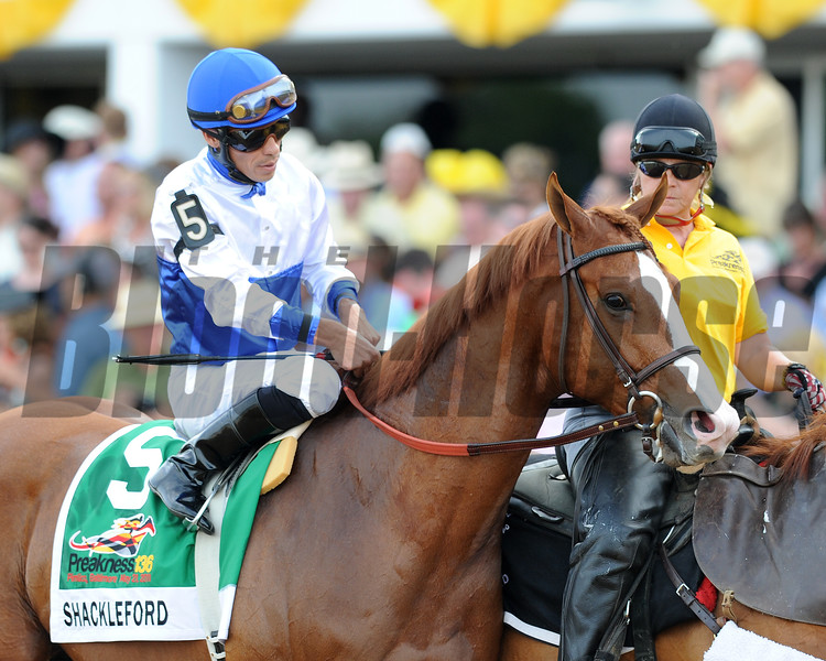 Shackleford, Jesus Castellon up wins the Preakness Stakes, Animal Kingdom and John Velazquez up finsih second Pimlico Race Track, Baltimore, MD 5/20/11,, first time by,  photo by Mathea Kelley