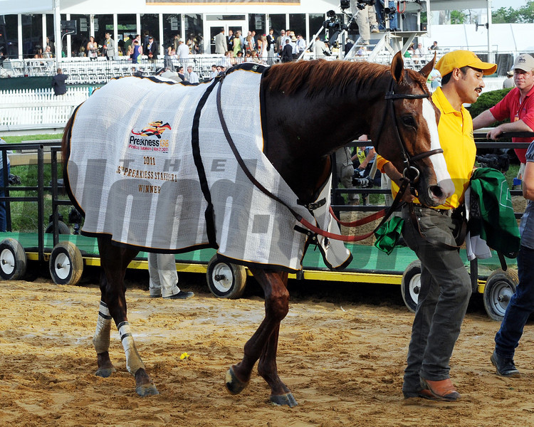 SHACKLEFORD WITH WINNERS BLANKET<br /> Preakness on May 21, 2011, at PImlico in Baltimore, Maryland<br /> Photo by: Dave Harmon