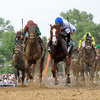Shackleford with jockey Jesus Lopez Castanon, center heads the field to the wire in the 136 running of The Preakness at Pimlico Race Course May 21, 2011.     <br /> Photo by: Skip Dickstein