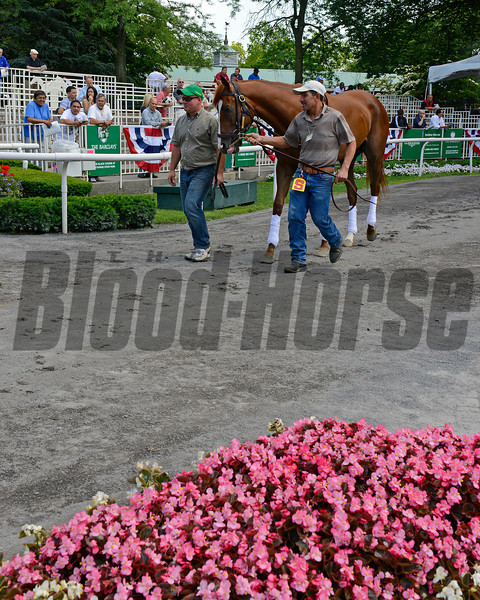Caption:  Dullahan schooling in the Belmont paddock.<br /> Belmont Park, June 7, 2012, Elmont, N.Y.<br /> Training hours activity on the track and at the barn.<br /> Photo by Anne M. Eberhardt