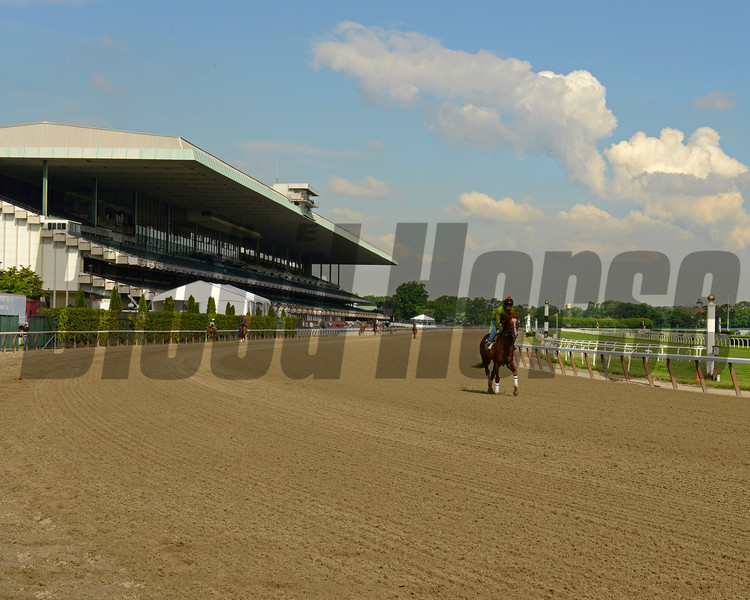 Caption:  Dullahan in front of Belmont grandstand<br /> Belmont Park, June 6, 2012, Elmont, N.Y.<br /> Training hours activity on the track and at the barn.<br /> Photo by Anne M. Eberhardt