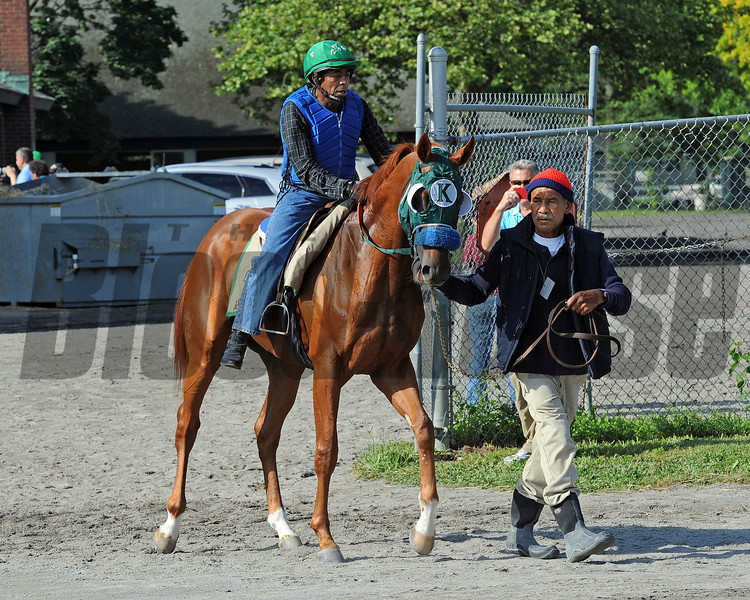 Ravelo's Boy on his way to the track Wednesday morning...<br /> © 2012 Rick Samuels/The Blood-Horse