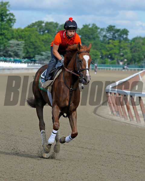 Caption:  Dullahan<br /> Belmont Park, June 5, 2012, Elmont, N.Y.<br /> Training hours activity on the track and at the barn.<br /> Photo by Anne M. Eberhardt