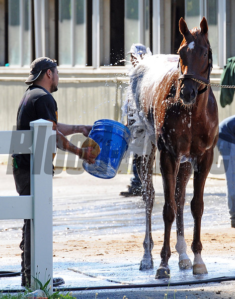 Kentucky Derby and Preakness winner I'll Have Another, getting his morning bath Sunday morning...<br /> © 2012 Rick Samuels/The Blood-Horse