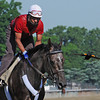 Unstoppable U galloping in company with an Oriole Thursday morning at Belmont...<br /> © 2012 Rick Samuels/The Blood-Horse