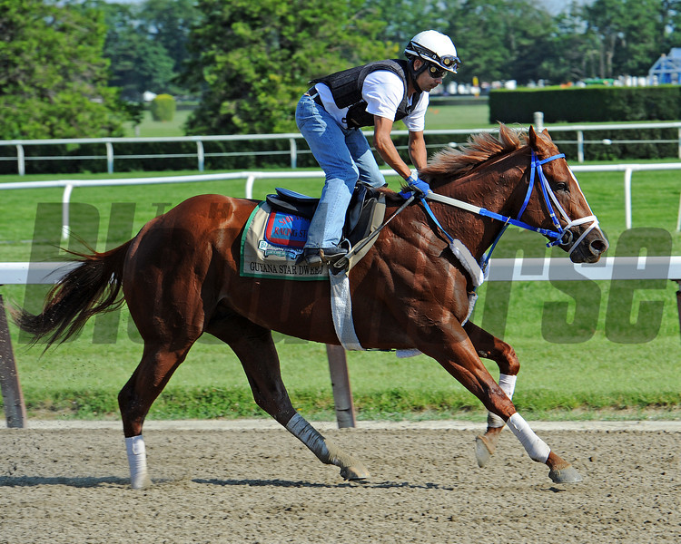 Belmont longshot Guyana Star Dweej Friday morning at Belmont<br /> © 2012 Rick Samuels/The Blood-Horse