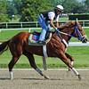 Belmont longshot Guyana Star Dweej Friday morning at Belmont<br /> © 2012 Rick Samuels/The Blood-Horse