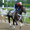 Caption:  Unstoppable U<br /> Belmont Park, June 5, 2012, Elmont, N.Y.<br /> Training hours activity on the track and at the barn.<br /> Photo by Anne M. Eberhardt
