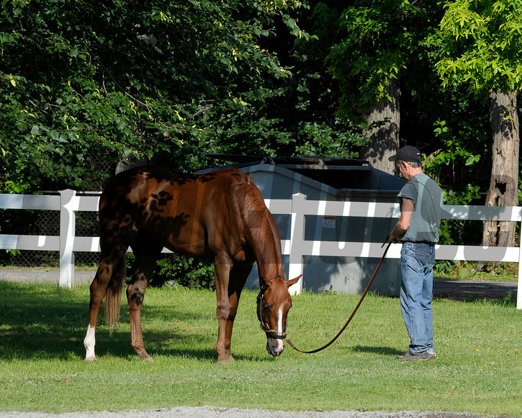 Caption:  Dullahan grazes by Barn 2<br /> Belmont Park, June 8, 2012, Elmont, N.Y.<br /> Training hours activity on the track and at the barn.<br /> Photo by Anne M. Eberhardt