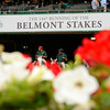 Belmont Park, June 9, 2012, Elmont, N.Y.<br /> Photo by Anne M. Eberhardt