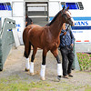 Union Rags arrives late Wednesday morning to Belmont...<br /> © 2012 Rick Samuels/The Blood-Horse