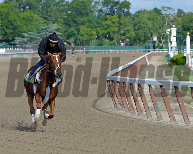 Caption:  I'll Have Another gallops<br /> Belmont Park, June 5, 2012, Elmont, N.Y.<br /> Training hours activity on the track and at the barn.<br /> Photo by Anne M. Eberhardt