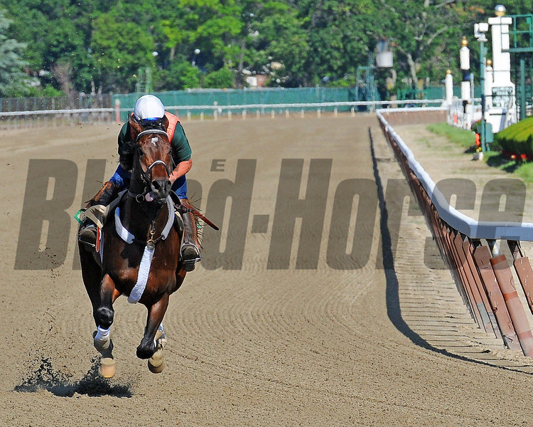 Atigun has a strong gallop Thursday morning at Belmont...<br /> © 2012 Rick Samuels/The Blood-Horse