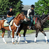 I'll Have Another heads to the track Thursday morning...<br /> © 2012 Rick Samuels/The Blood-Horse
