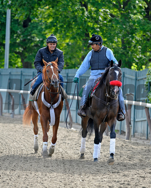 Caption: I'll Have Another, left, comes off the track with Lava Man<br /> Belmont Park, June 5, 2012, Elmont, N.Y.<br /> Training hours activity on the track and at the barn.<br /> Photo by Anne M. Eberhardt