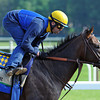 Paynter gallops 1 1/2 mi Wednesday morning at Belmont...<br /> © 2012 Rick Samuels/The Blood-Horse