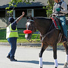 Caption:  Security halts traffic so Lava Man can get back to his barn after escorting I'll Have Another to the track and back to Barn 2.<br /> Belmont Park, June 7, 2012, Elmont, N.Y.<br /> Training hours activity on the track and at the barn.<br /> Photo by Anne M. Eberhardt