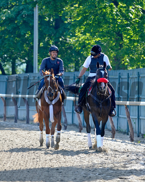 Caption:  I'll Have Another, left, leaves the track with Lava Man.<br /> Belmont Park, June 6, 2012, Elmont, N.Y.<br /> Training hours activity on the track and at the barn.<br /> Photo by Anne M. Eberhardt